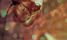 Seni Yaşıyorum ve Senli Rüyalara hayalinle Dalıyorum