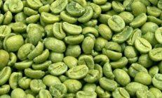 Yeşil Kahve Hakkında Merak Ettiğiniz Her Şey