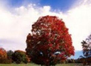 Ağaç Kesmek