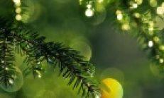 Ağaç Yaprağı