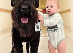 Avustralya' nın Doktor Köpeği :