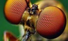 Eşek Böceği