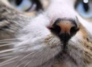 Kedi Isırması