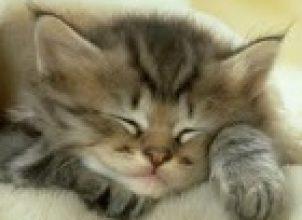 Kedi Satmak