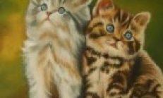Kediyi Kesmek