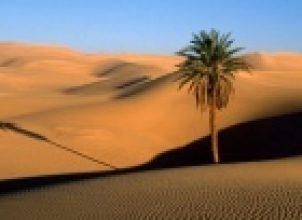 Kum ve Toprak Satın Almak