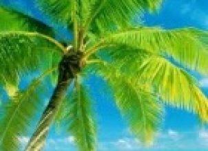 Palmiye Ağacı
